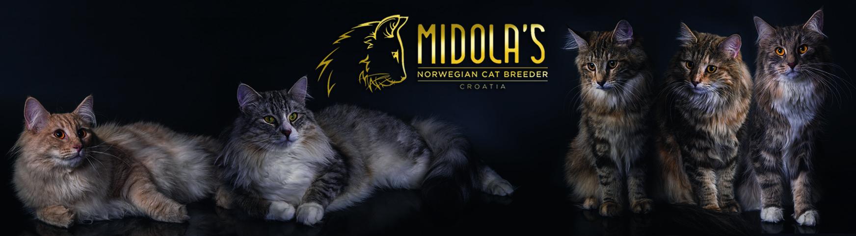 Midola's