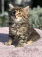 Phoebe - 6 weeks