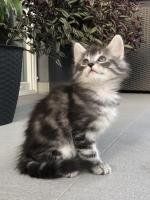 Sebastian - 7 weeks