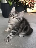 Sebastian - 8 weeks