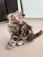 Sebastian - 9 weeks