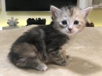Sophie - 4 weeks
