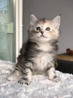 Sophie - 6 weeks