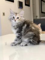 Sophie - 10 weeks