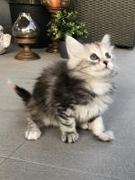Sophie - 8 weeks