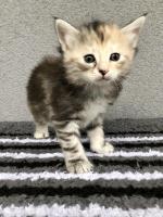 Sophie - 5 weeks