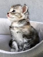 Stella - 4 weeks