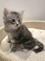 Stella - 5 weeks