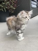 Stella - 9 weeks