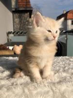 Sylvester - 6 weeks
