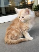 Sylvester - 8 weeks