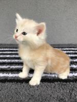 Sylvester - 5 weeks