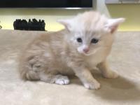 Sylvester - 4 weeks