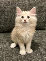 Sylvester - 9 weeks